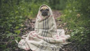 פחד משתק מכלבים